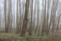 Nebel 01181