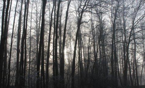 Nebel 011810