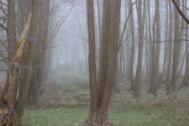 Nebel 01184