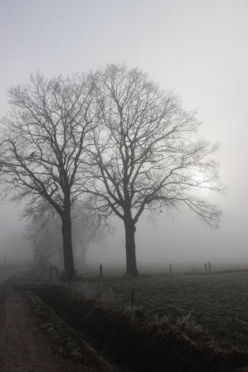 Nebel 01186