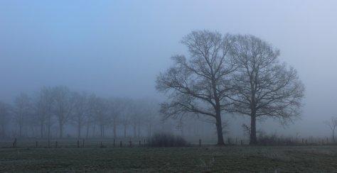 Nebel 01187